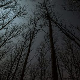nightmare scene of a dark woods