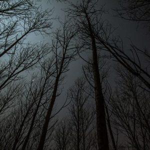 nightmare scene of a dark woods