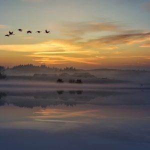 image of a pretty nature dreamscape