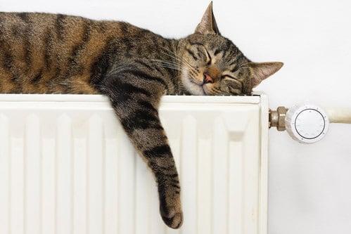 cat relaxing on bedroom radiator