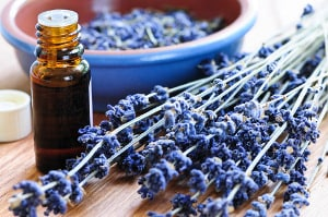 photo of a bottle of lavender oil and lavender flowers