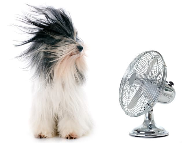photo of a portable fan